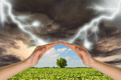 Two hands preserve a green tree against a thunder-storm. Concept of preservation of the nature.